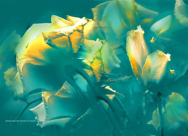 Rosas Y Azules Print by Alfonso Garcia