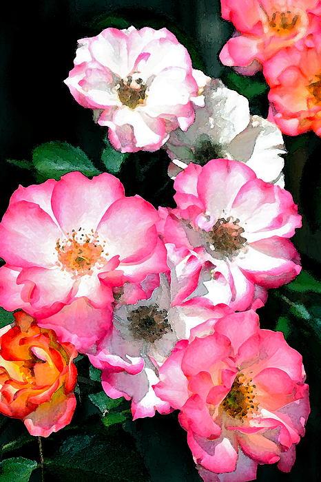 Rose 133 Print by Pamela Cooper