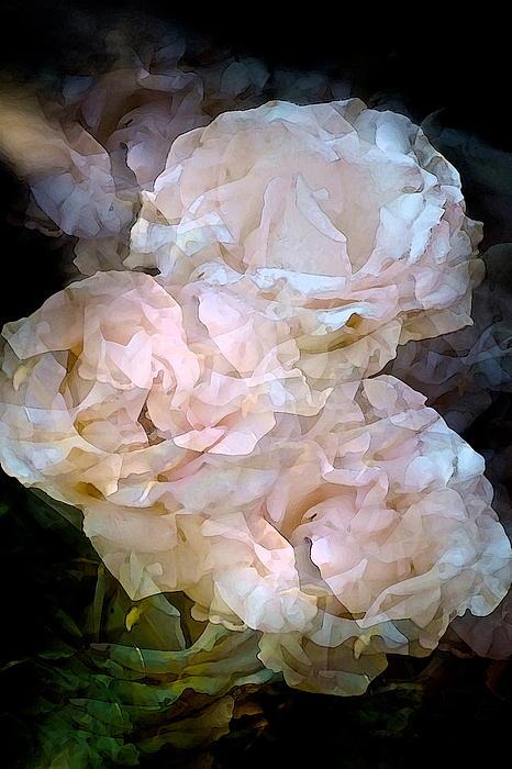 Rose 145 Print by Pamela Cooper
