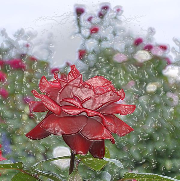 Rose Forever Print by Vijay Sharon Govender