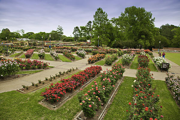 Rose Garden Park Print by M K  Miller