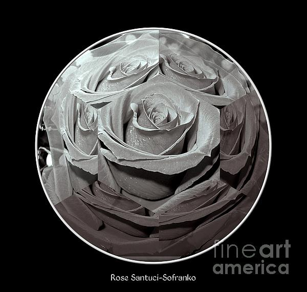 New artwork comments for Rose under glass