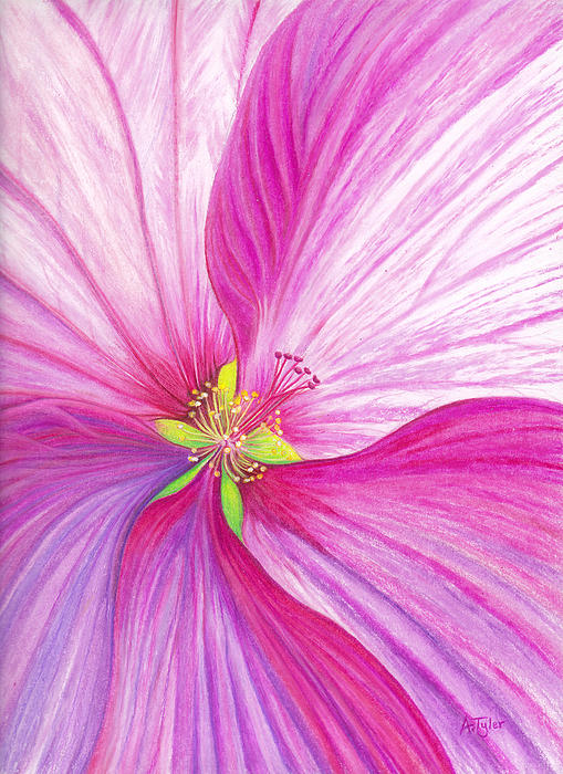 Rose Mallow Print by Amy Tyler