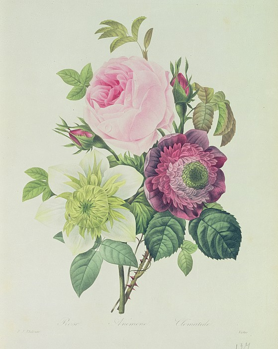 Rose Print by Pierre Joseph Redoute