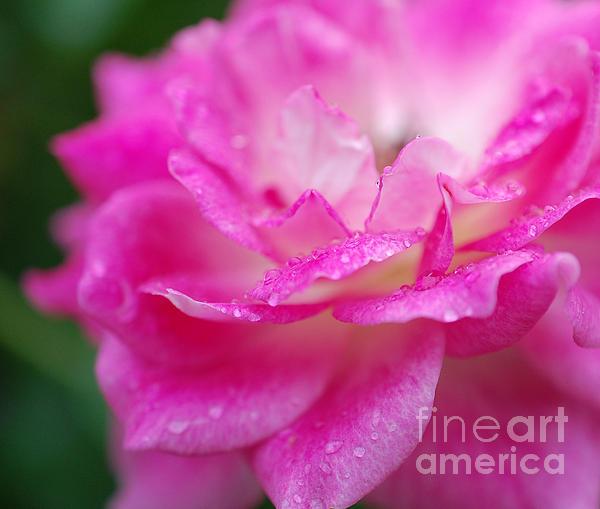 First Star Art  - Rose Pink