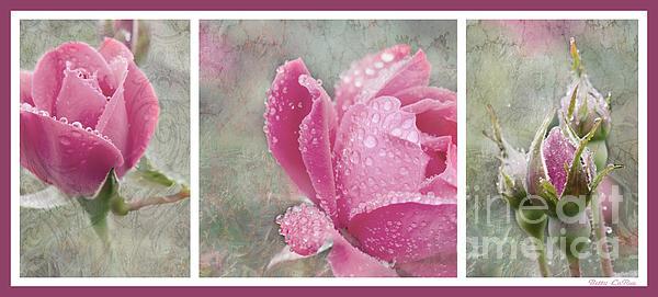 Betty LaRue - Rose Triptych 1