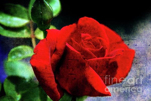 Roses Are Red My Love Print by Susanne Van Hulst