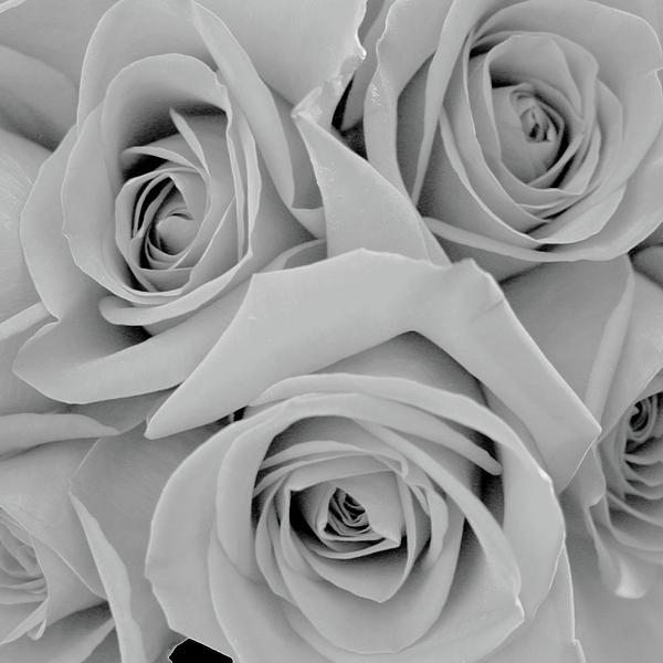 shades of grey  photography