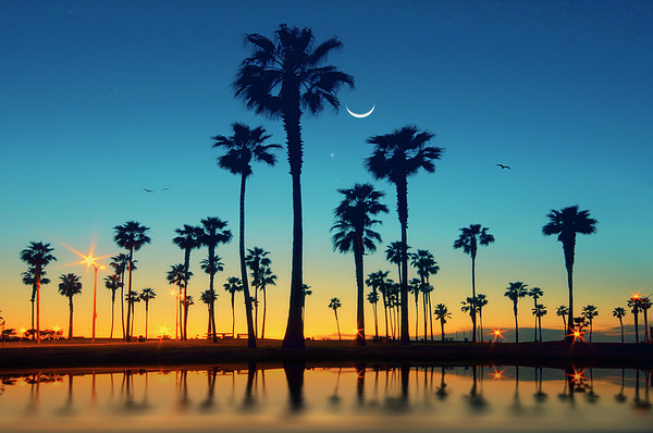 Row Of Palm Trees Print by Lee Sie Photography