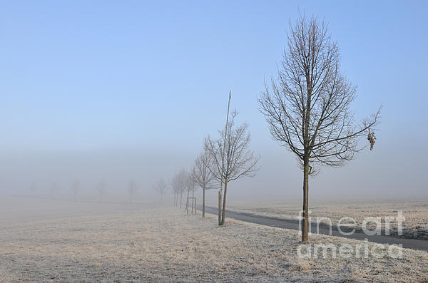 Row Of Trees In The Morning Print by Matthias Hauser