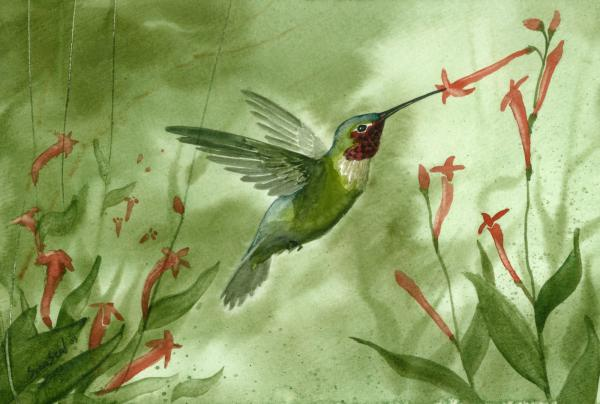 Ruby Throated Hummingbird Print by Sean Seal