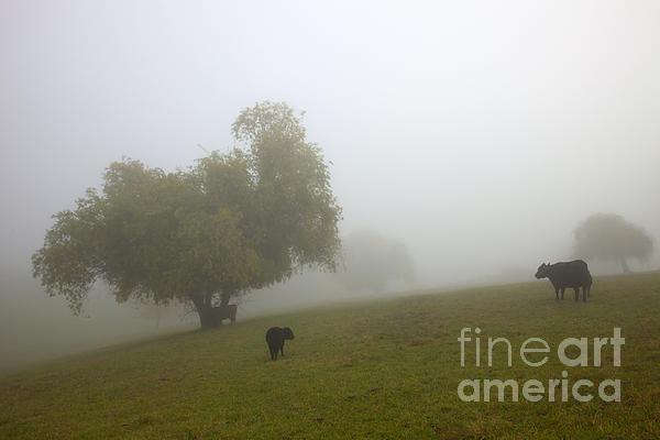 Rural Fog Print by Mike  Dawson