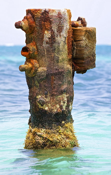 Rusted Dock Pier Of The Caribbean II Print by David Letts