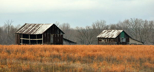 Rustic Illinois Print by Marty Koch