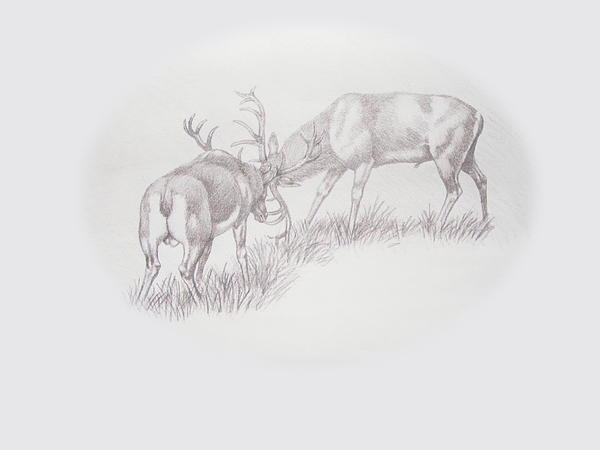 Rutting Season Drawing  - Rutting Season Fine Art Print
