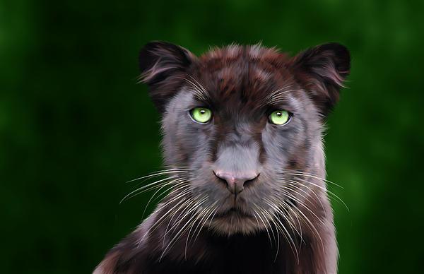 Saber Print by Big Cat Rescue