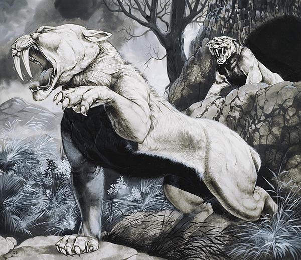 Sabre-toothed Tigers Print by Richard Hook