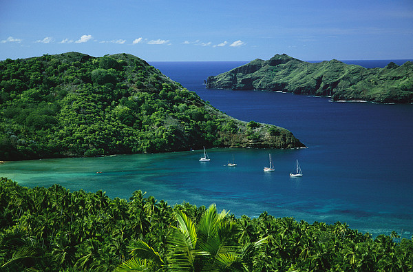 Sailboats Anchored In A Cove Of Blue Print by Tim Laman