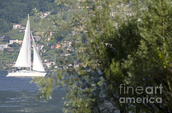 Sailing Boat And Trees Print by Mats Silvan