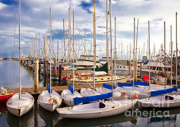 Sailoats Docked In Marina Print by David Buffington