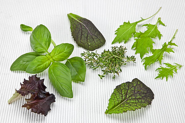 Salad Greens And Spices Print by Joana Kruse