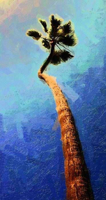 San Clemente Beach Palm Print by Ron Regalado