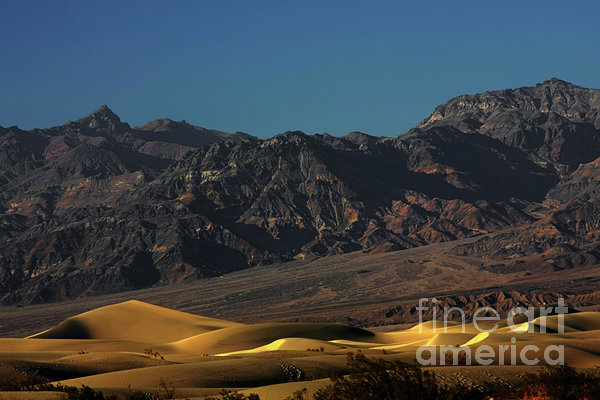 Sand Dunes - Death Valley's Gold Print by Christine Till