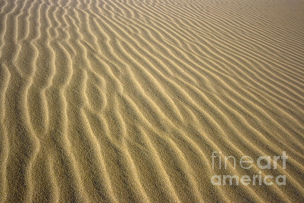 Sandhills Print by MotHaiBaPhoto Prints