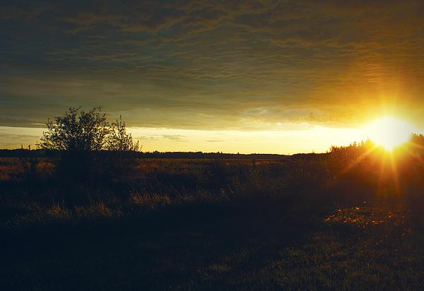Larysa Luciw - Sandy Sunset