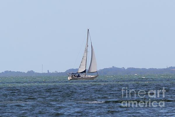 Sarasota Sailing Print by Theresa Willingham