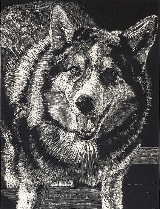 Sarge The Dog Print by Robert Goudreau