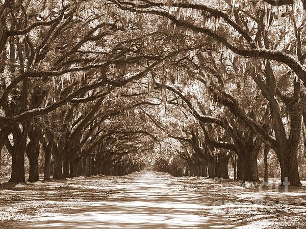 Savannah Sepia - Glorious Oaks Print by Carol Groenen