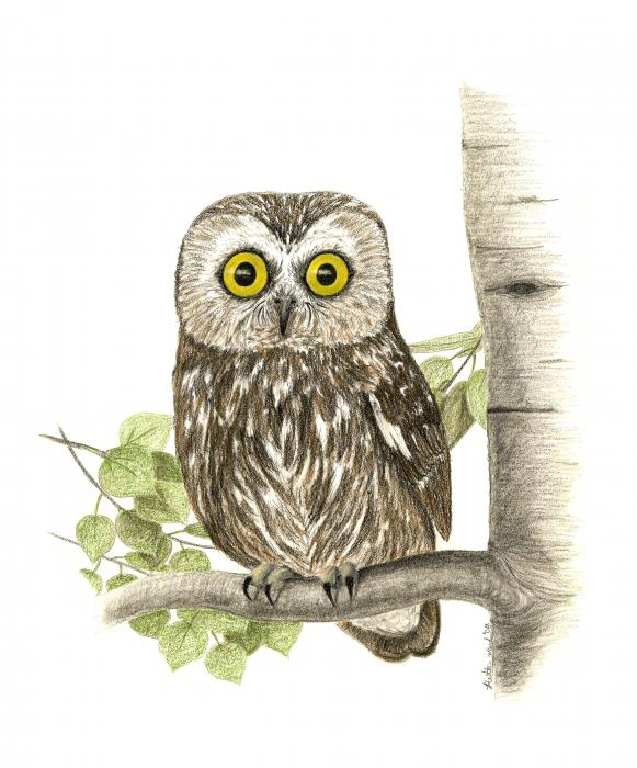owl pictures to color image search results
