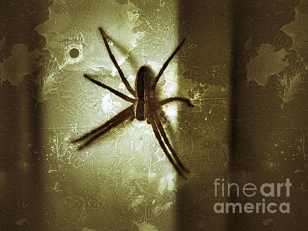 Scary Spider Print by Christy Bruna