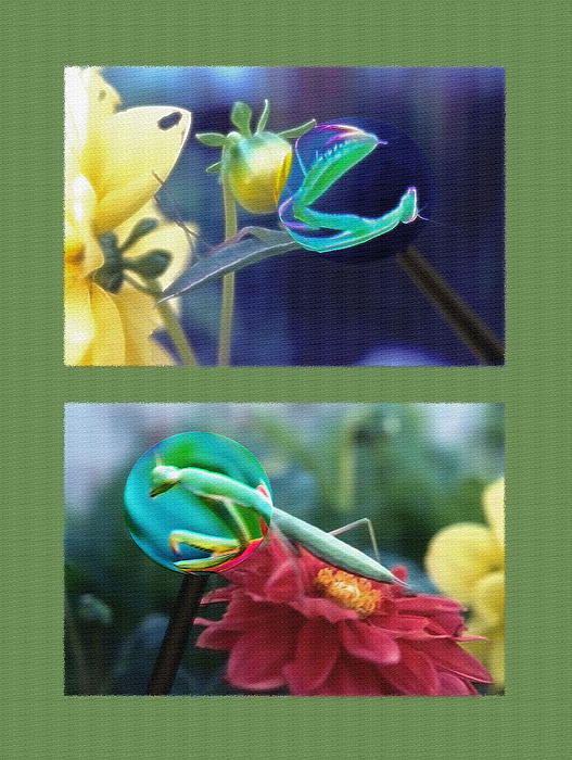 Science Class Diptych 2 - Praying Mantis Print by Steve Ohlsen
