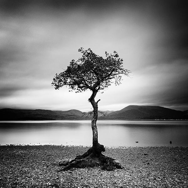 Scotland Milarrochy Tree Print by Nina Papiorek