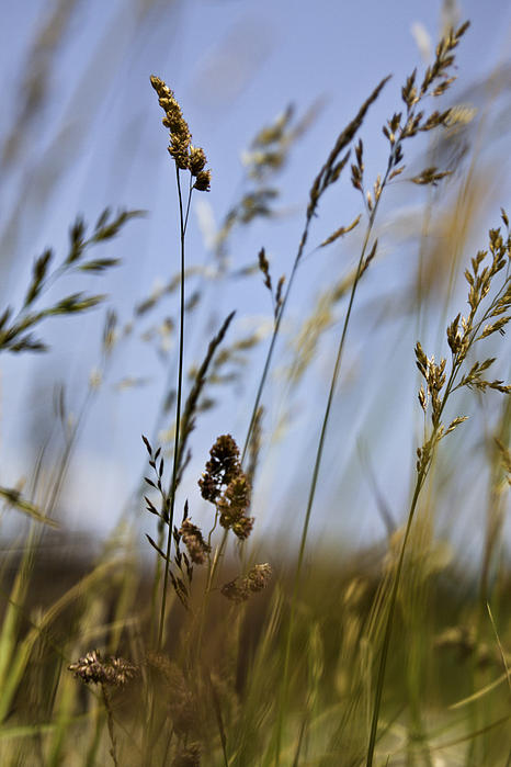 Diane Schuster - Sea Grass