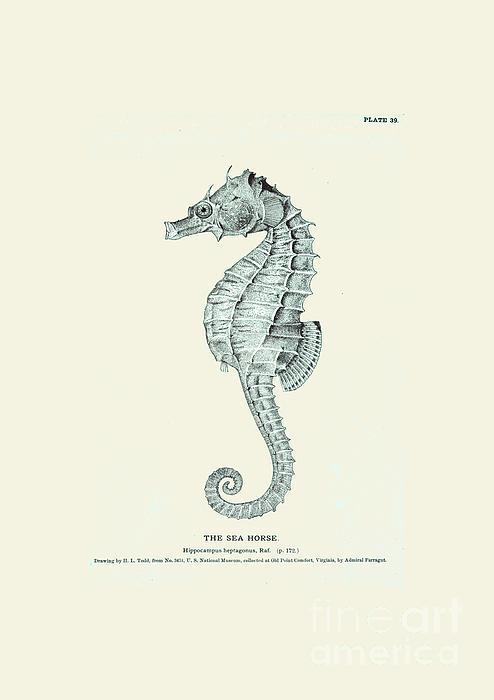 Sea Horse  Print by Patruschka Hetterschij
