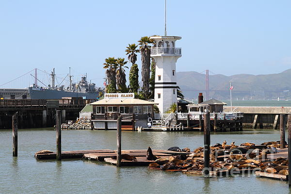 Sea Lions At Pier 39 San Francisco California . 7d14294 Print by Wingsdomain Art and Photography