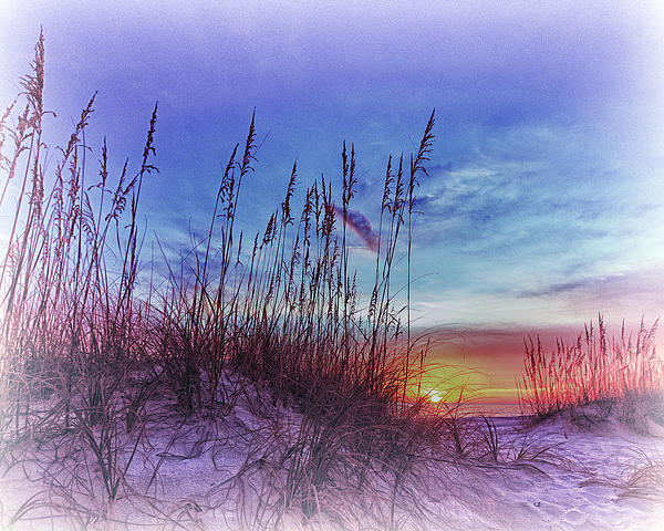 Sea Oats 5 Print by Skip Nall
