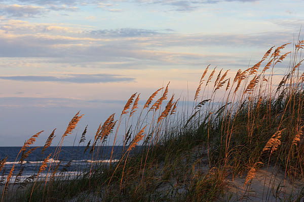 Kim Galluzzo Wozniak - Sea Oats Blowing In The Wind