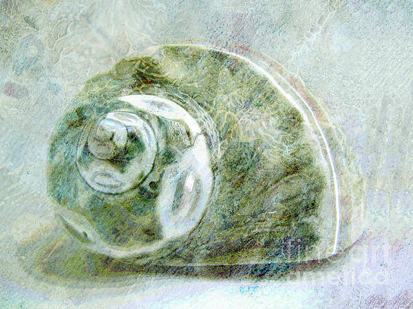 Sea Shell I Print by Ann Powell