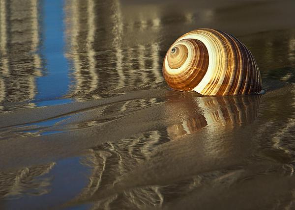 Sea Shells Print by Renee Doyle