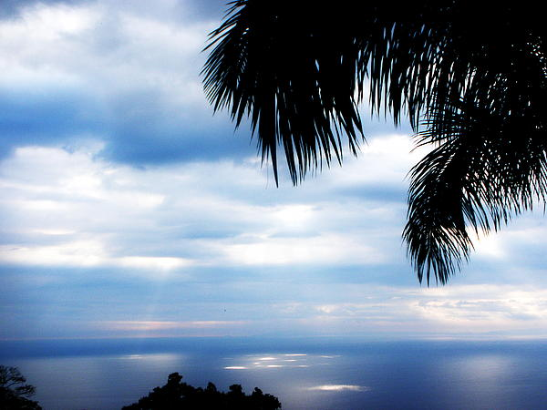 Sea Sky And Palm Tree Print by Rosvin Des Bouillons