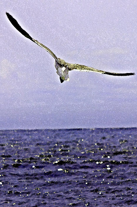 Tom Gari Gallery-Three-Photography - Seagull