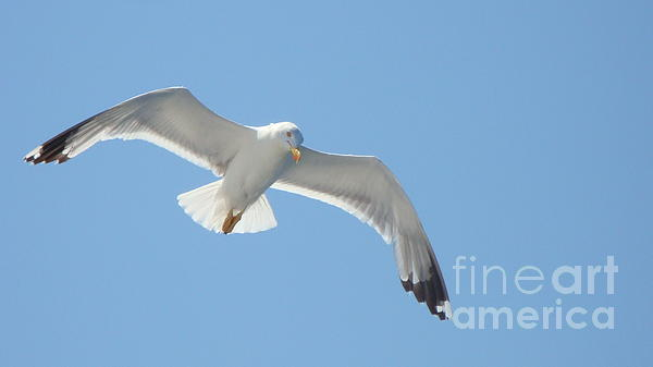 Seagull On The Sky Print by Olga R