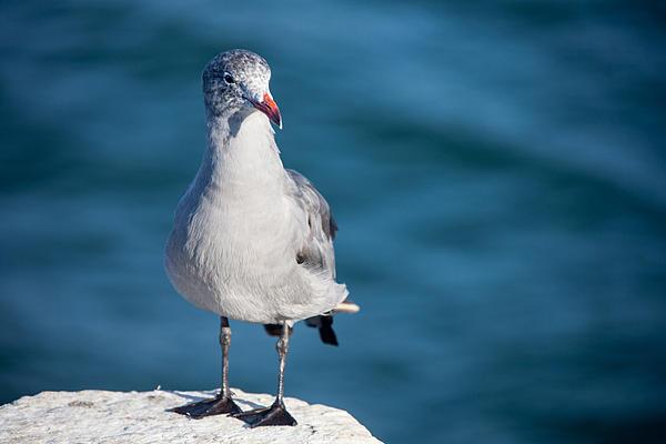 Ralf Kaiser - Seagull