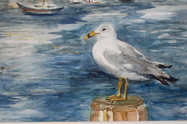 Seagull Print by Siona Koubek