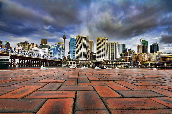 Seagull's Perspective Print by Douglas Barnard
