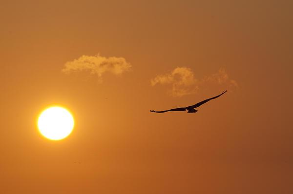 Bill Cannon - Seahawk Sunrise